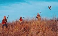 Three Hunters Shooting for Pheasants